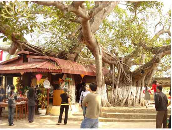 đền cây đa 13 gốc